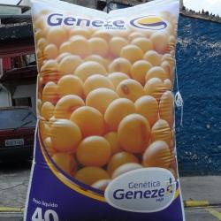 Inflaveis promocionais genetica geneze